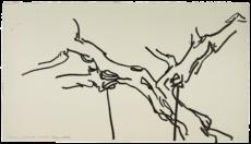 Le pistachier de château-noir, étude n°01