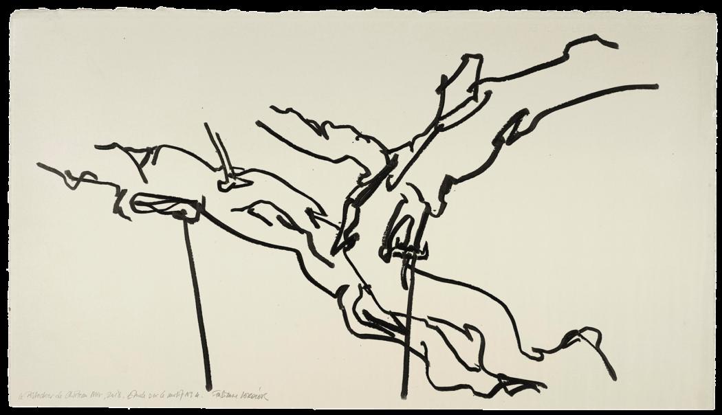 Le pistachier de château-noir étude n°04