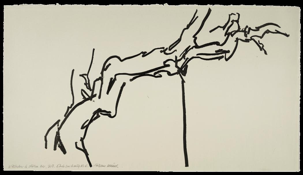 Le pistachier de château-noir, étude n°06
