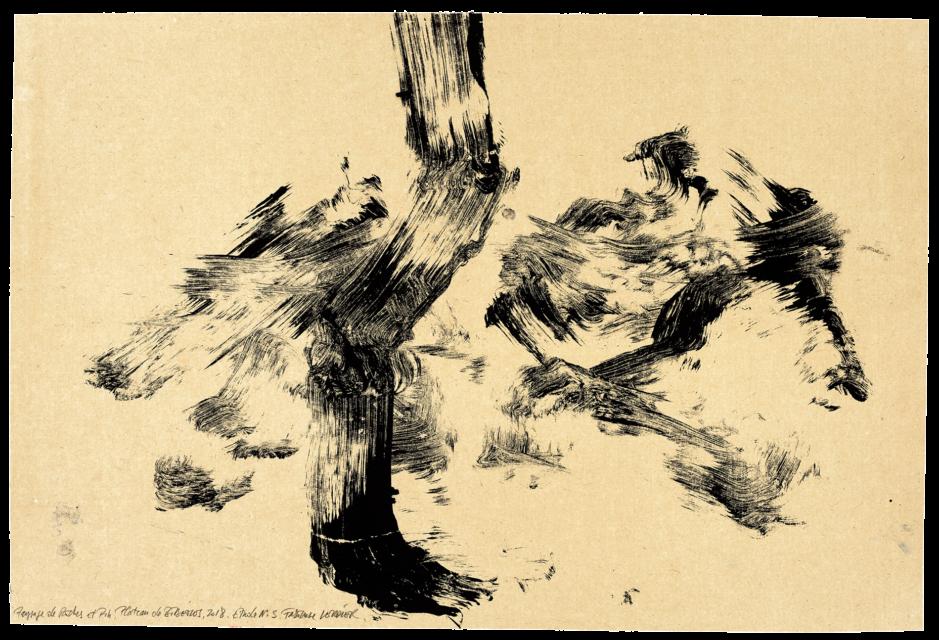 Paysage de roche et de pins plateau de Bibemus, étude n°03