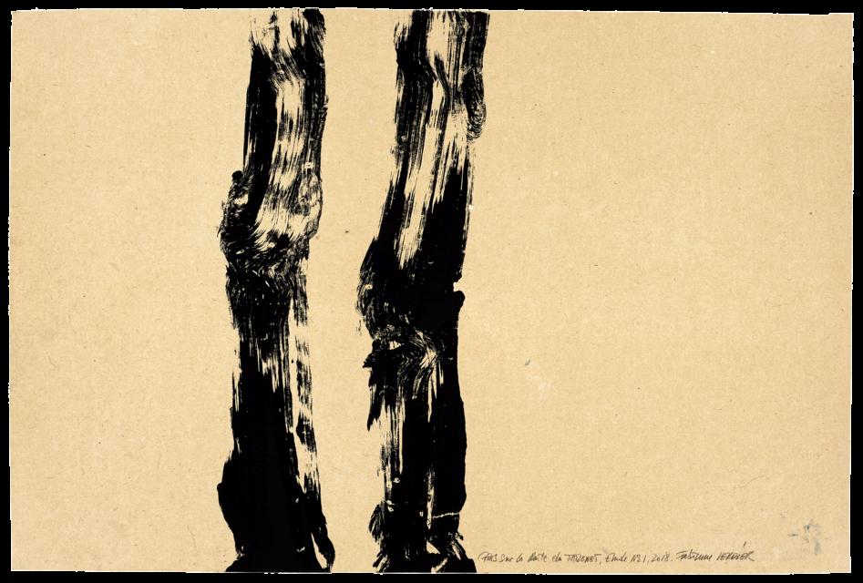 Pins sur la route du Tholonet, étude n°01
