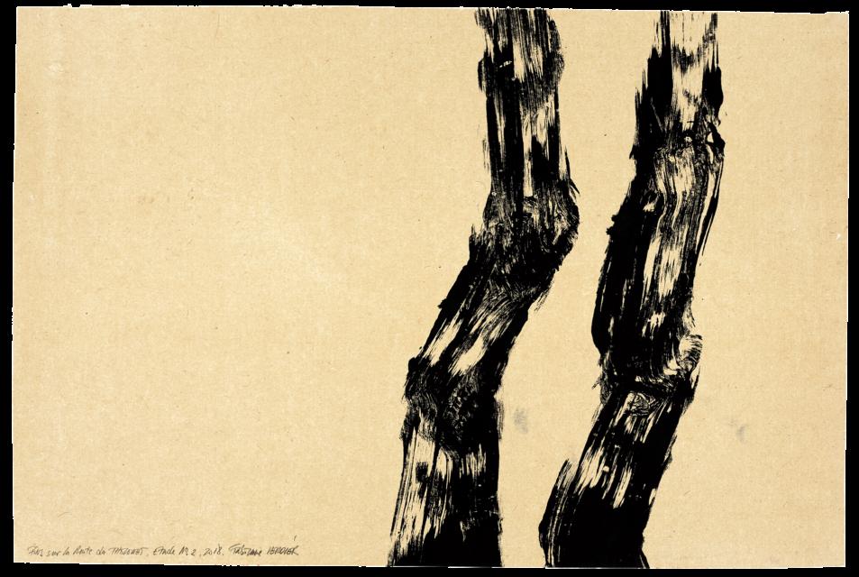 Pins sur la route du Tholonet, étude n°02