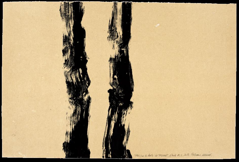 Pins sur la route du Tholonet, étude n°03