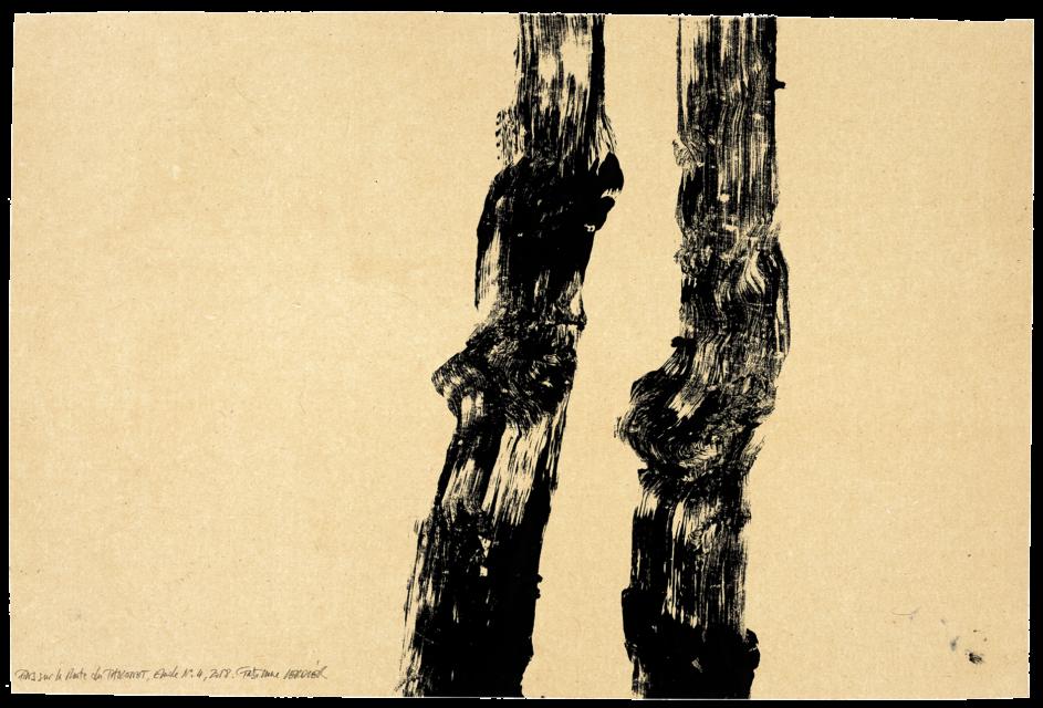 Pins sur la route du Tholonet, étude n°04